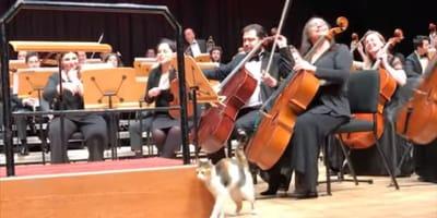 Kot na koncercie w filharmonii