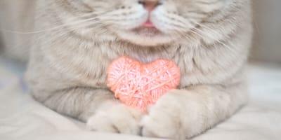 enfermedades cardiacas en gatos