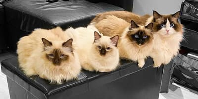 four cats sharing small black box