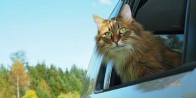 Kätzchen büxt aus: Plötzlich steht ein Auto mit zwei Männern vor Frauchens Tür