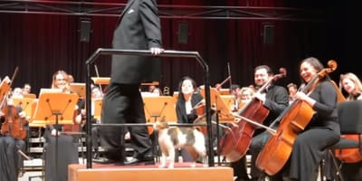 Montage showing cat on stage at Instabul Concert Hall