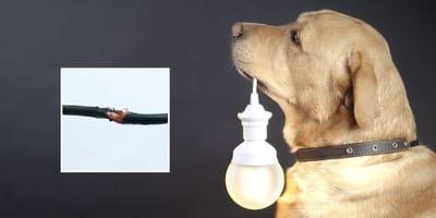 perro electrocutado cable