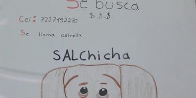 niño hace dibujo de su perrita para encontrarla