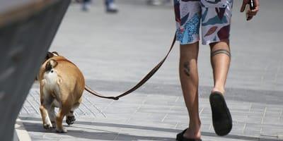 giovane con cane in strada
