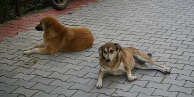 perros callejeros ahuyentan ladrones que asaltaban a paramedico