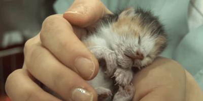 gatito recien nacido