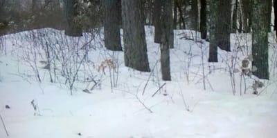 Tajemniczy cień w lesie