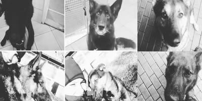 Polizeihunde Magnet, Jogin, Edamis, Lasso, Jerk und Long