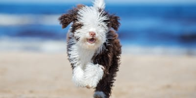 5 razas preciosas de perros blancos y negros