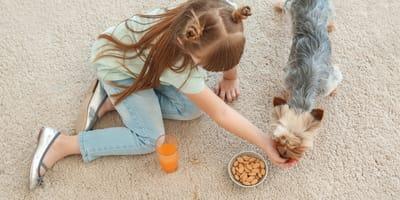 Frutos secos para perros