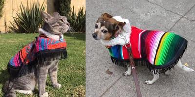 ropa para perro con estilo mexicano