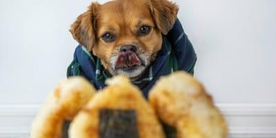 Arroz inflado para perros
