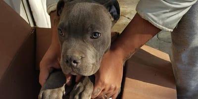 niño abandona perro apra salvarlo del maltrato