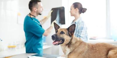 Hund wird beim Tierarzt geröntgt
