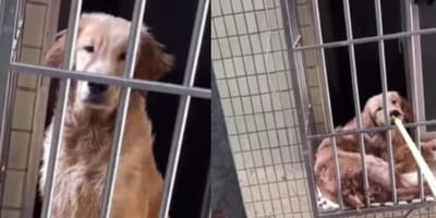 Neighbour's brilliant idea saves dog's life while owner is away