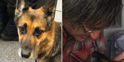 un-pastore-tedesco-ha-salvato-il-suo-proprietario