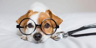 cane-dal-veterinario