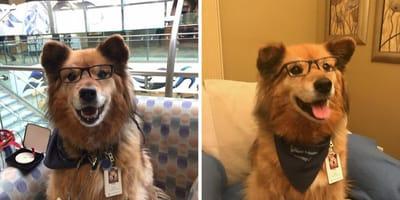 Therapiehund Rusty