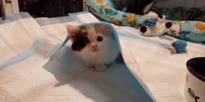 Drei behinderte Kätzchen werden Freunde fürs Leben und geben sich viel Liebe und Kraft