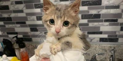 Kociak stawia czoła śmiertelnej chorobie. Jego opiekunka jest zdeterminowana