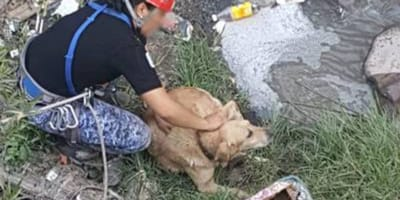 rescatan a perro que cayo en una coladera