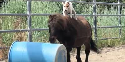 Hund zu Pferd