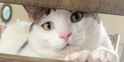 Kot_zaglada_przez_plot