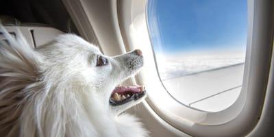 Fliegen mit Hund: Alle Bestimmungen bei Lufthansa im Überblick