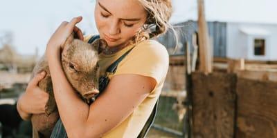 voluntario santuario refugio animales
