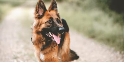 German dog names for your dog or puppy
