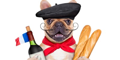 Beautiful French dog names: Get inspired!