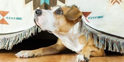 cane si affaccia da sotto il copriletto