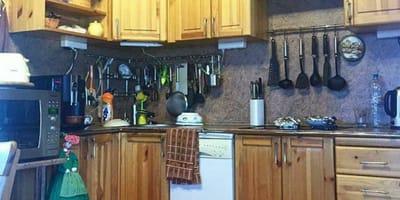 Nur schlaue Menschen finden das Kätzchen, das sich in der Küche versteckt