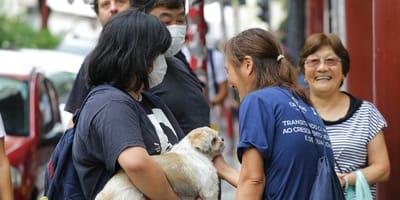 coronavirus china perros