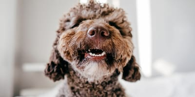 Spanish dog names: Get inspired for your future dog's name