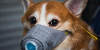 """Coronavirus: un cane risulta per la prima volta """"debolmente positivo"""""""