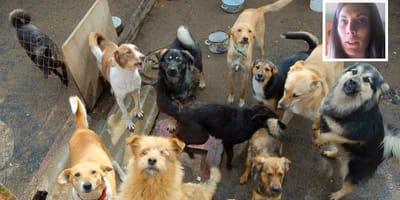 perro abandonados ley bienestar animal galicia