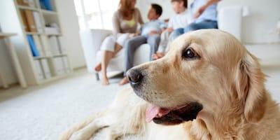 <p>Un adorable labrador con su familia.</p>