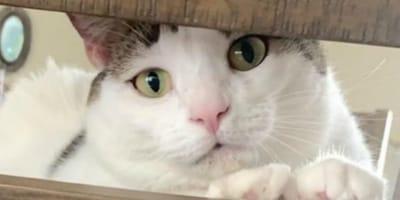 Katze muss zum Tierfrisör