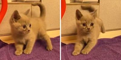 Kätzchen im Tierheim