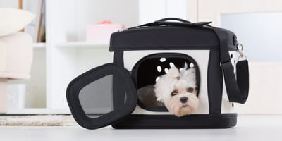 How to train a dog to use a transportation bag