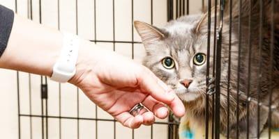 adoptowany kotek ze schroniska