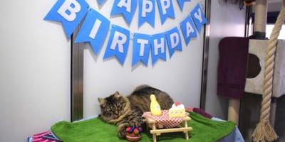 Traurige Geburtstagsparty
