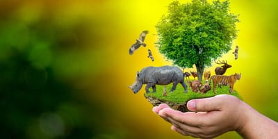 dia mundial naturaleza animales peligro extincion