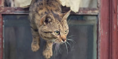 gato roba pescado en vidceo viral