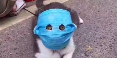 Gatos con cubreboca: ¿realmente puede proteger a mi gato?