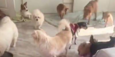 Rischi per cani e gatti nell'epicentro del Coronavirus (Video)