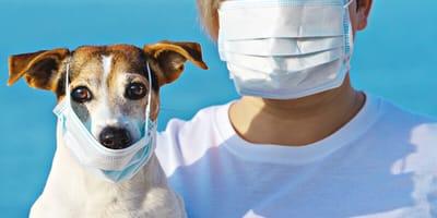 Coronavirus: Was passiert mit meinem Haustier während der Quarantäne?