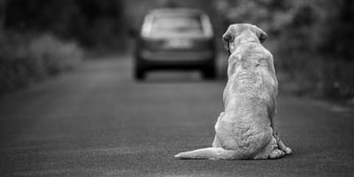 abandono de un perro