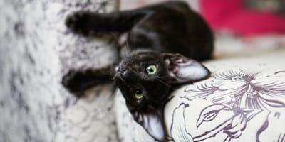 Blacky, das Kätzchen, das stolze 11 Millionen Euro erbte